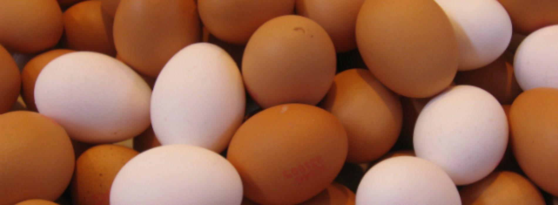Artigos do Lidl passam a ser confeccionados com ovos de solo